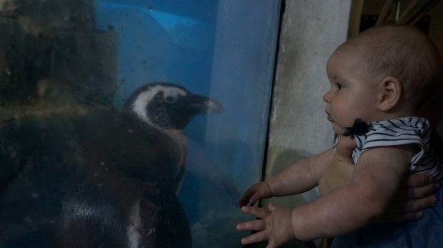 Wer blinzelt zuerst - Eva oder der Pinguin?