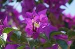 Blüte im Uluwatu-Tempel