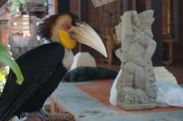 Vogel in Ubud